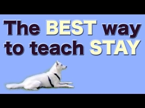 Best Way To Train Dog Obedience