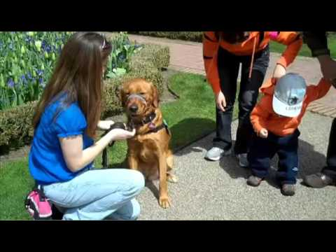 how to train dog   dog training classes   dog obedience