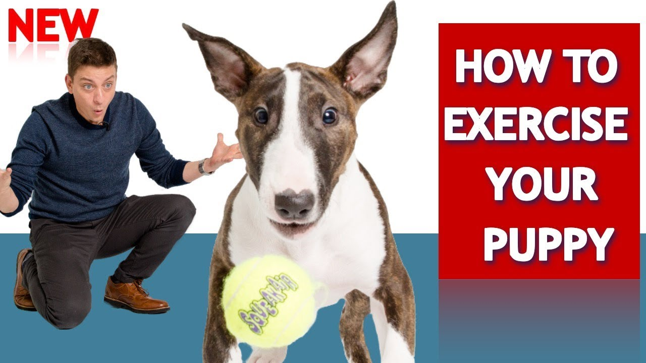 How to Exercise Your Puppy! | DogTrainingGear.com